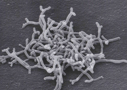 BifidoREAL 비피다발효여과물