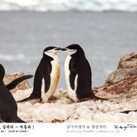 남극 여행가 & 펭귄작가 (김완수)