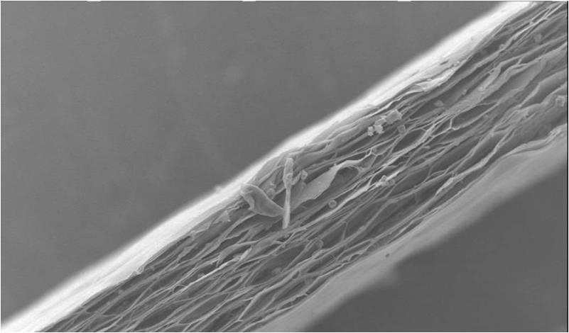 Emfit  필름 SEM 사진(두께 70 microns)