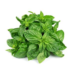 식물성 생약