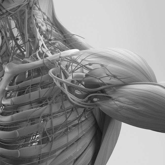 근골격계 질환 Musculoskeletal