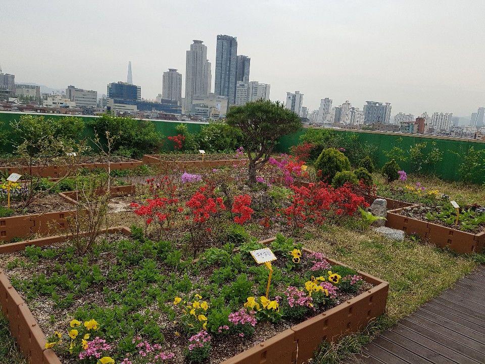옥상정원 꽃밭
