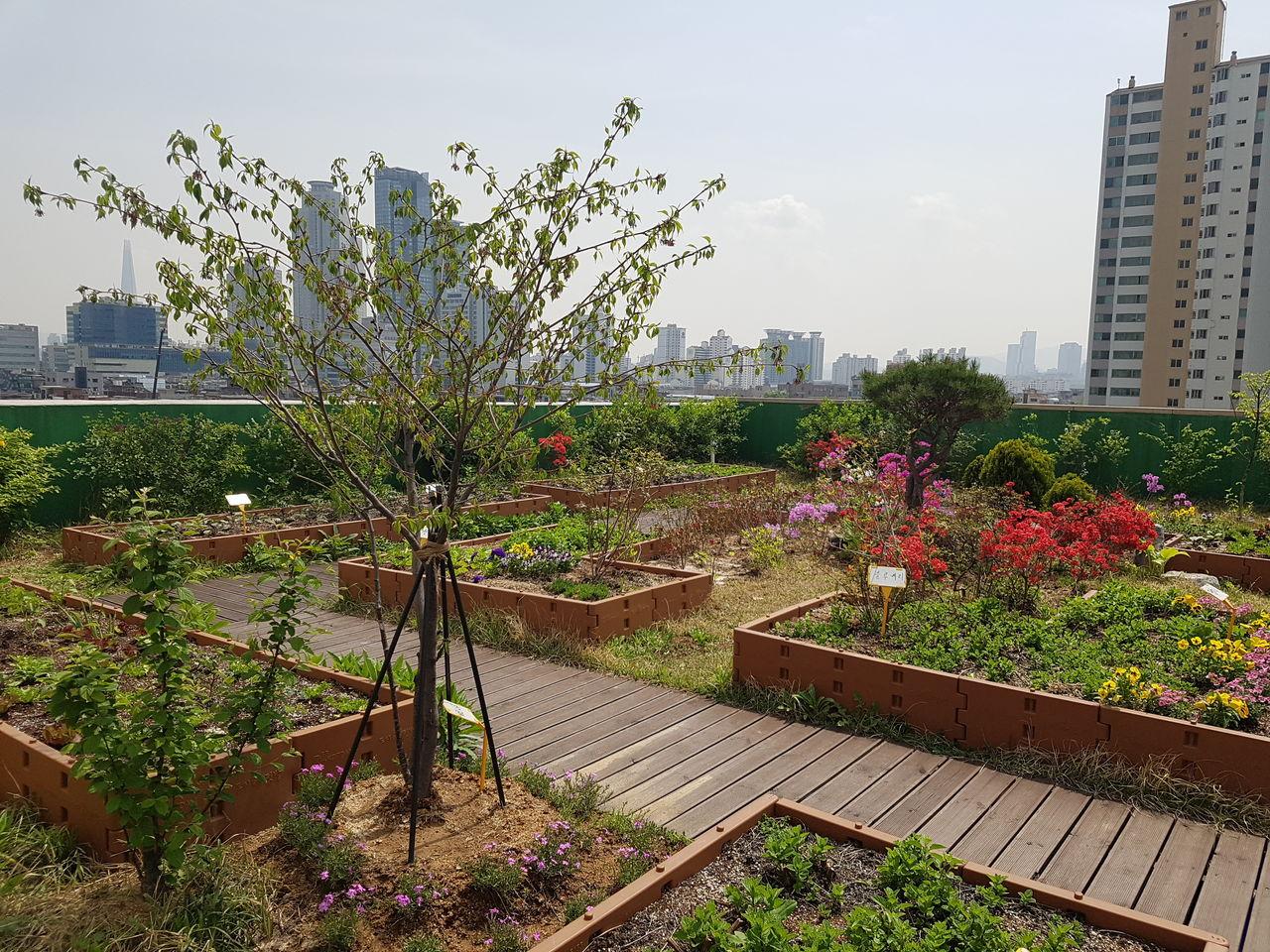 옥상정원 밭작물 재배