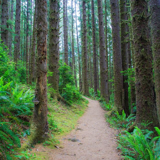 펜션 인근 산책 및 산림욕