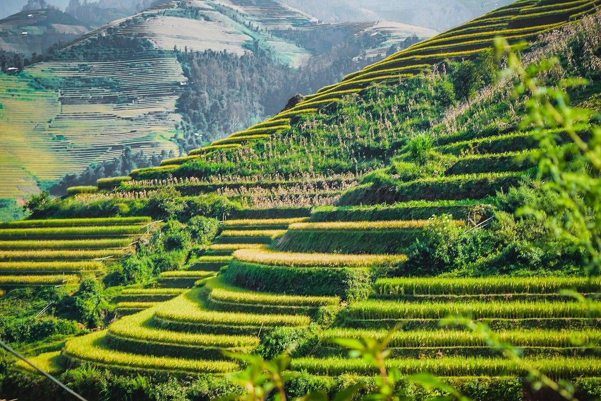 ベトナム<br/>Vietnam
