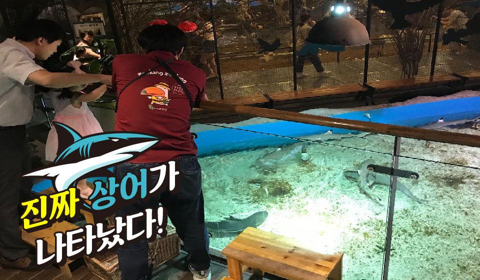 상어 먹이주기 체험