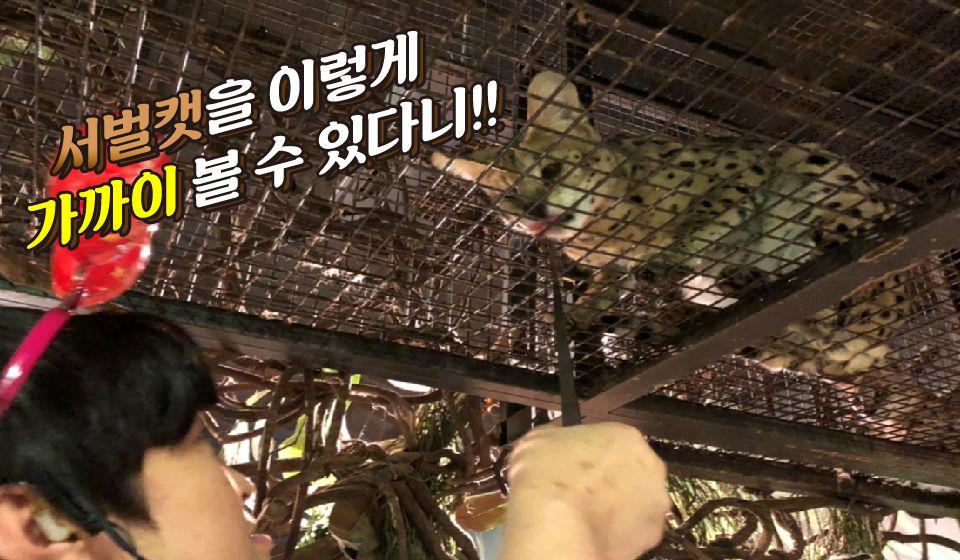 서벌캣 먹이주기 체험