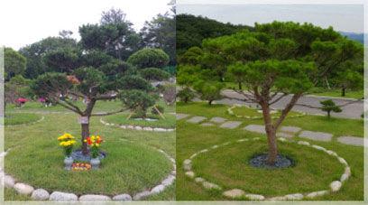수목종류 : 소나무, 향나무