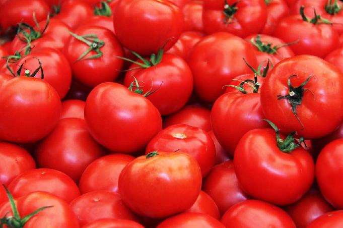 유기농토마토