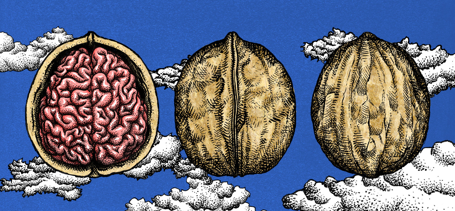 Brain in a nutshell