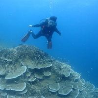 아름다운산호군락