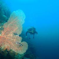 아름다운 부채산호와 함께