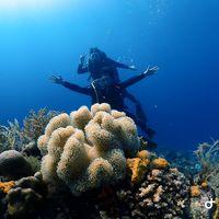 아름다운 산호와 함께 올랑고아일랜드