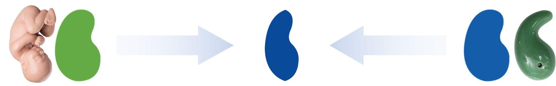 Biocera logo meaning