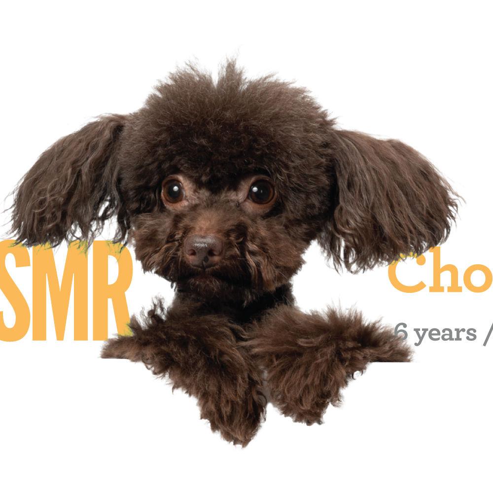 <b> Choco / 6 years / 2.5kg </b>