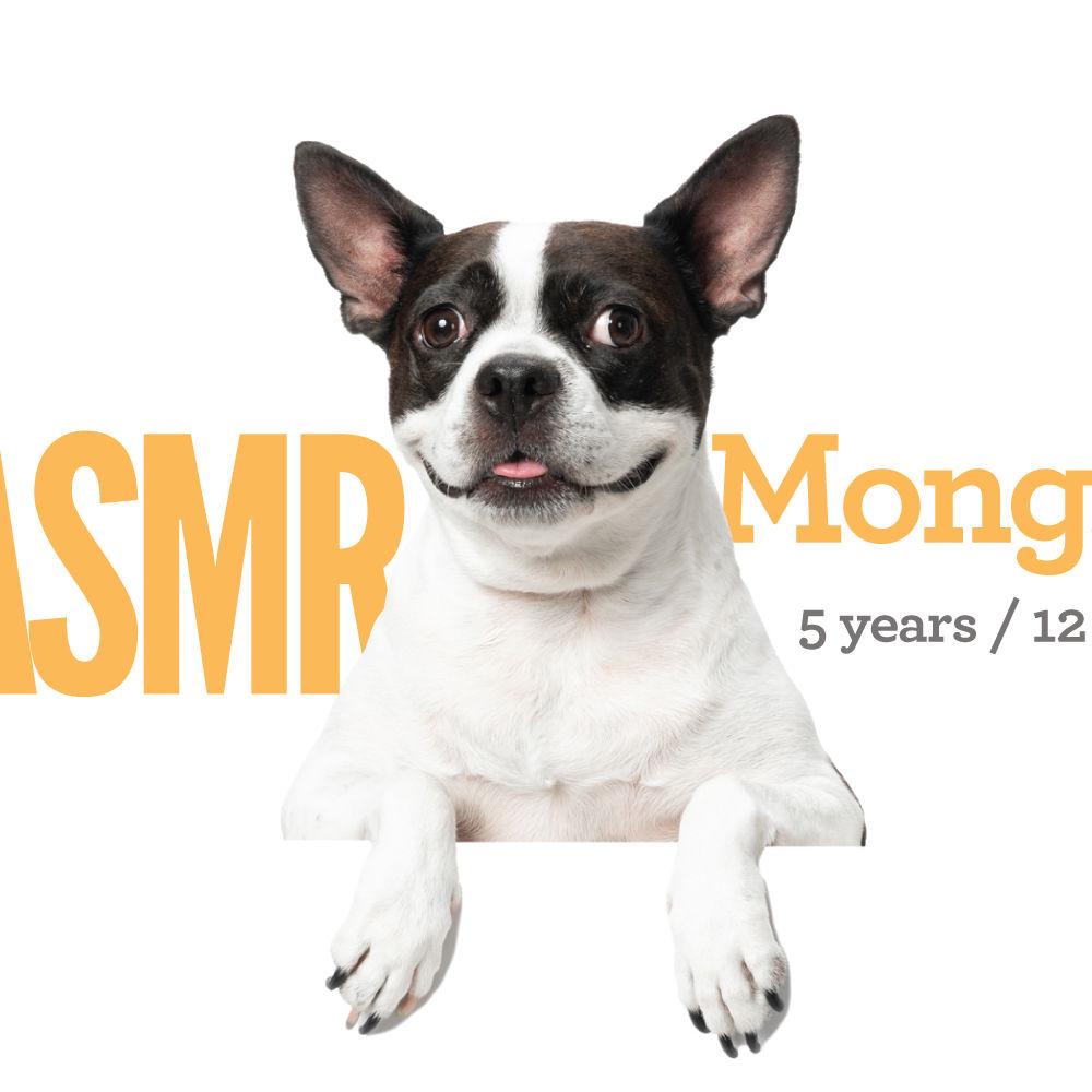 <b> Mong.E / 5 years / 12kg </b>