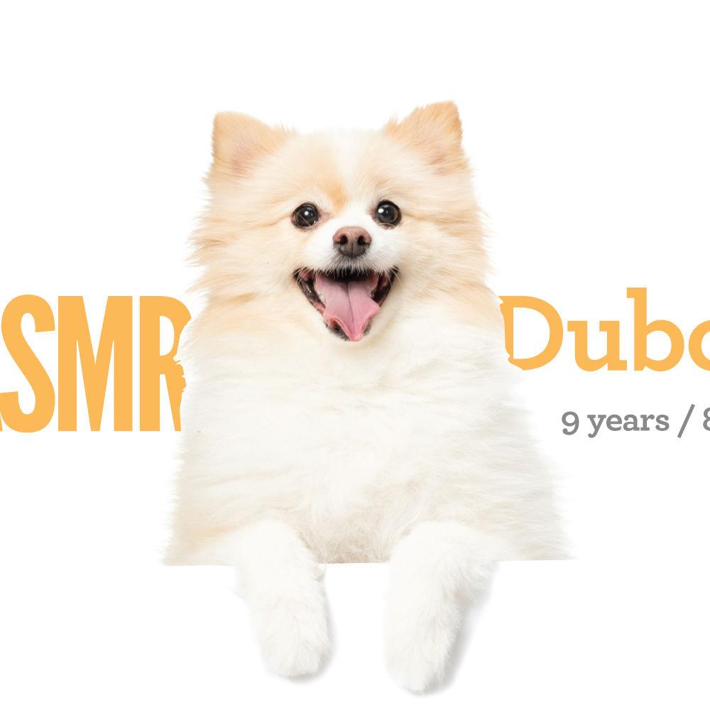 <b> Duboo / 9 years / 8kg </b>