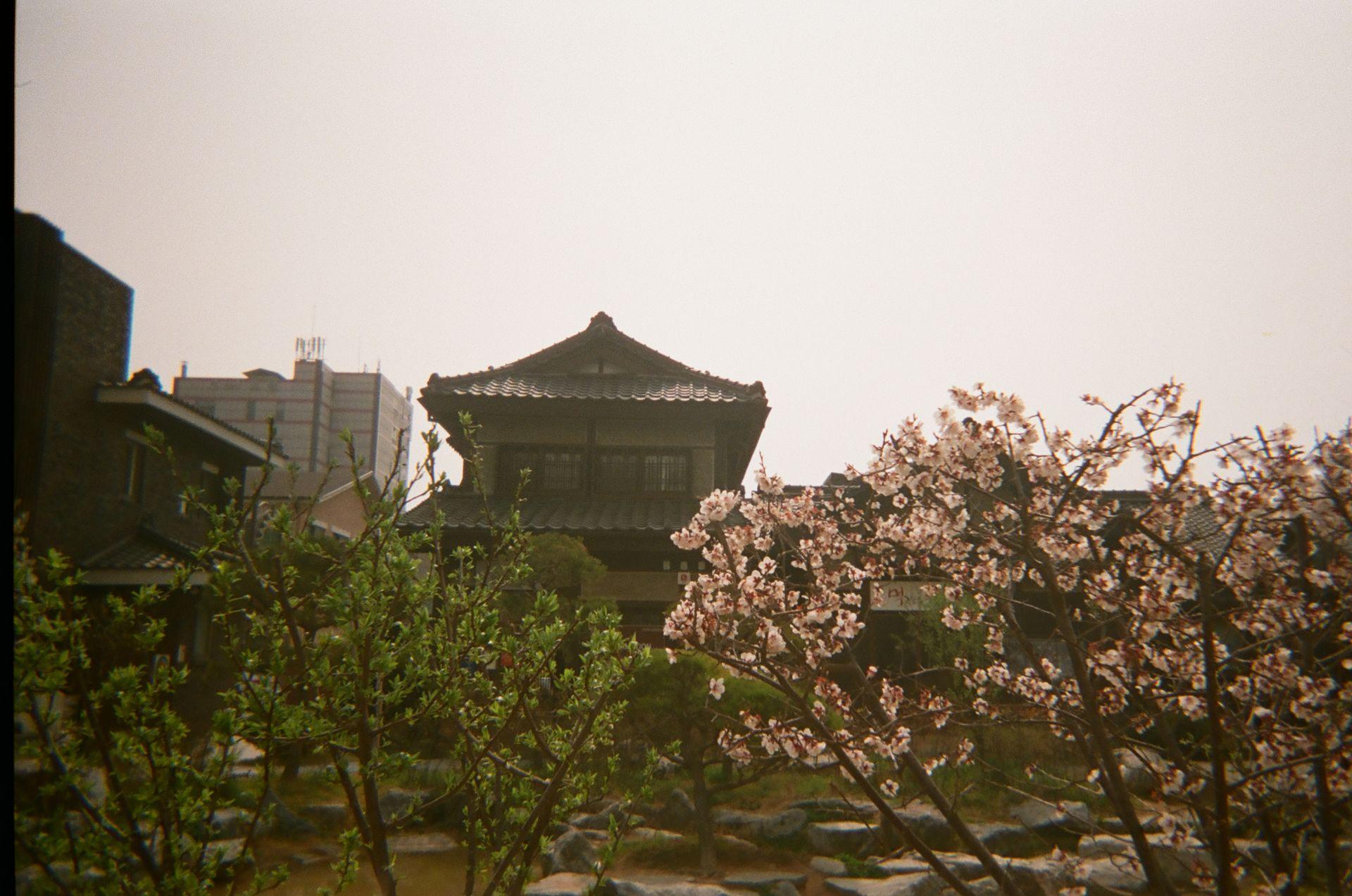 """""""군산의 봄은 분홍색 꽃들과 연둣빛 신록으로 가득했어요."""" - Hanna"""