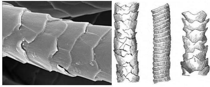 섬유의 표면 구조