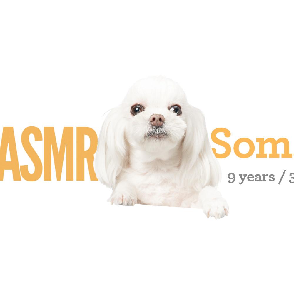 <b> Som.E / 9 years / 3kg </b>