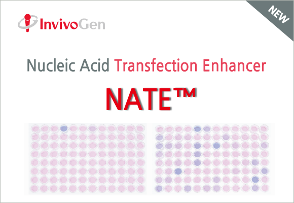 THP-1 과 RAW 264.7 세포에 특화된 Nucleic Acid Transfection Enhancer