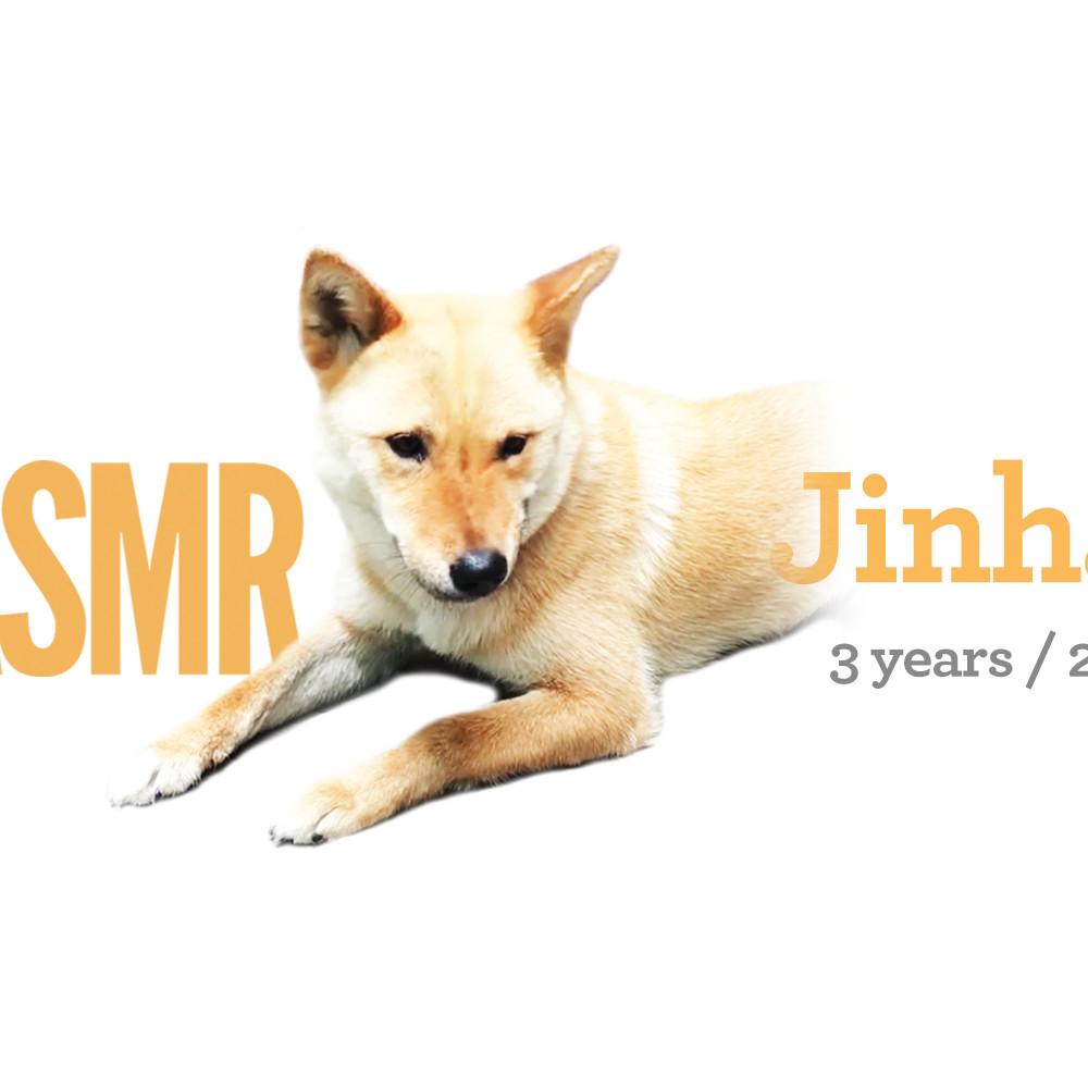 <b> Jinhae / 3 years / 23kg </b>