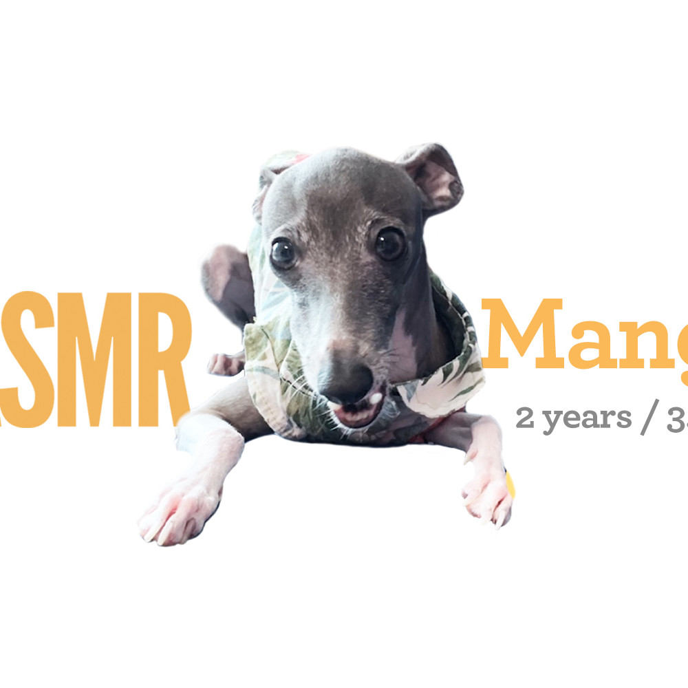 <b> Mango / 2 years / 3.5kg </b>