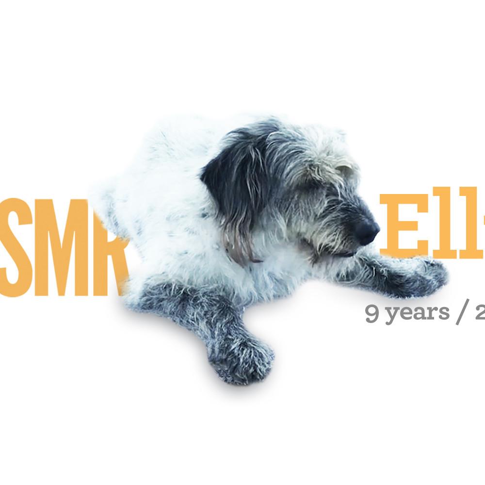 <b> Elly / 9 years / 25kg </b>