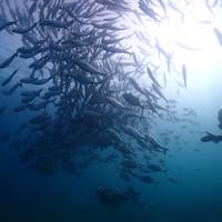 프리미엄 교육중인 jj 바다를 사랑하는 다이버로 만들어 드립니다
