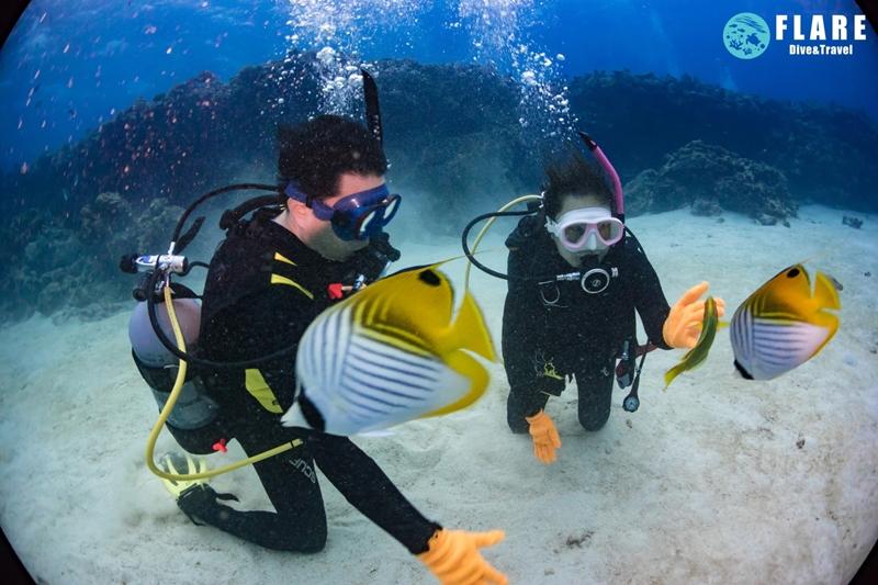 오키나와 케라마제도 하프데이 체험다이빙