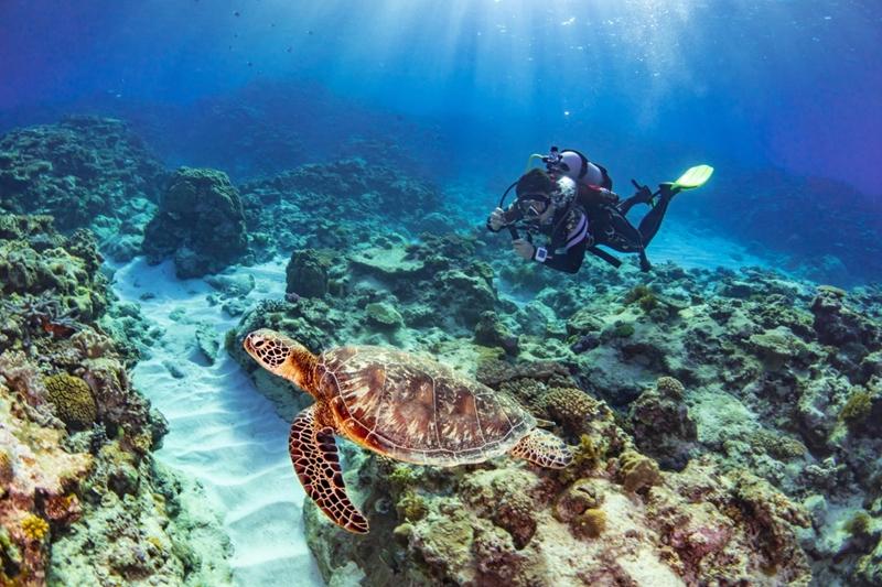 오키나와 펀다이빙 케라마 제도 해상국립공원