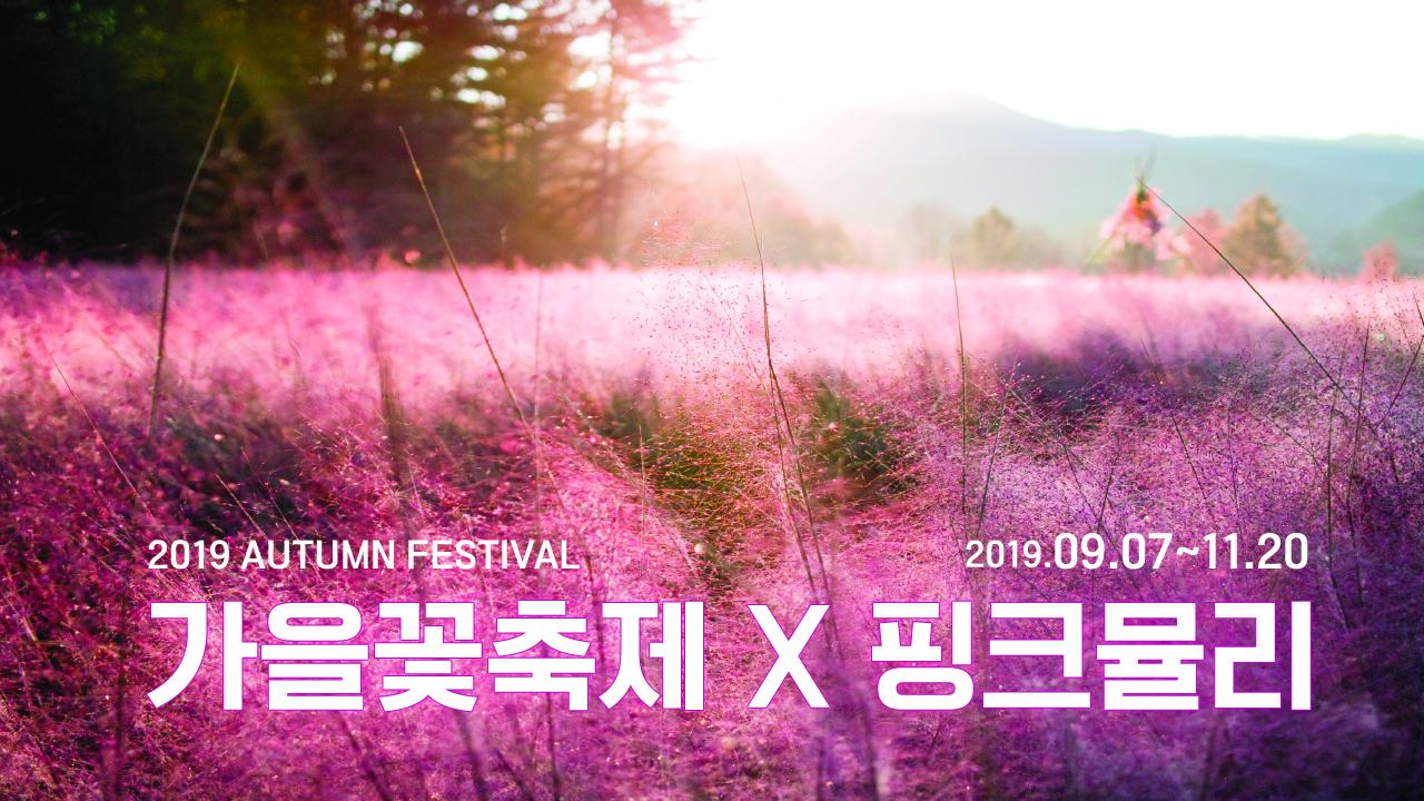 가을꽃축제X핑크뮬리  <br>2019.09.07 - 11.20 평강랜드 (경기 포천시)