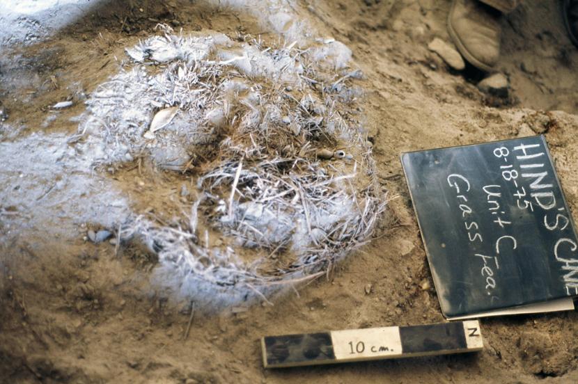 1975 년 Hinds Cave에서 발견 된 초기 신석기 시대의 풀로 채워진 구덩이는 어린이 크기의 수면 침대였을 것으로 짐작됨 (이미지 제공 : 선사시대 텍사스)