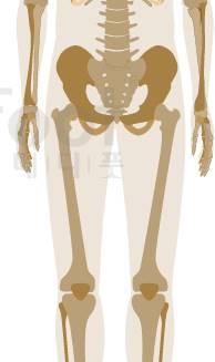 무릎,골반,허리