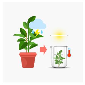 최적화된 식물체 배양 & 생산
