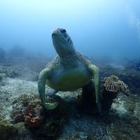 거북이를 만나다