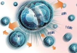 새로운 섬유아세포(Baby collagen/Elastin) 생성