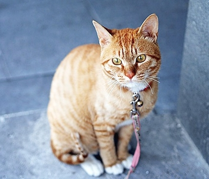 고양이 키우는 비용은 얼마 ?
