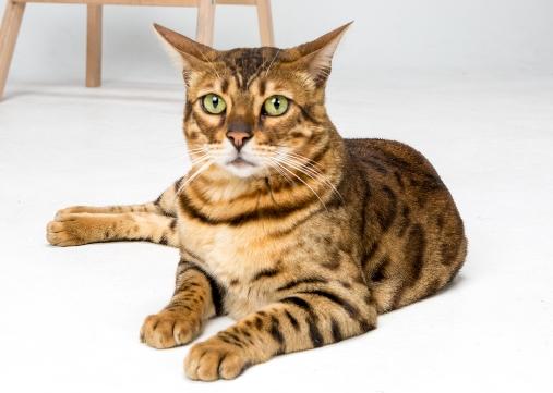 고양이 입양하고 싶다면 왜 파양하는지도 아셔야해요