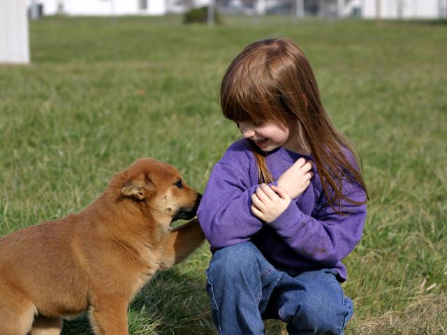 강아지가 당신을 사랑하고 있다는 10가지 증거