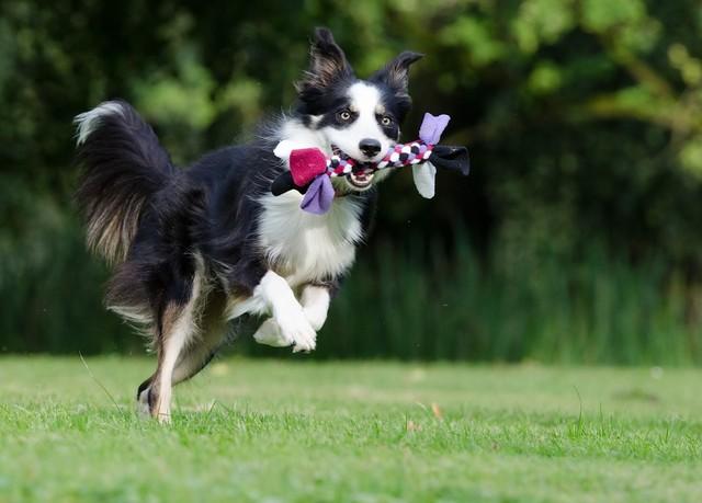 새로 데려온 강아지를 쉽게 훈련시키는 10가지 방법