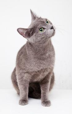 고양이를 키우는 당신이 꼭 알아야할 10가지