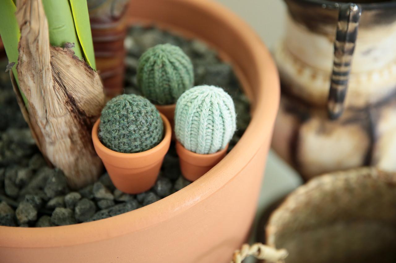선인장(Cactus)
