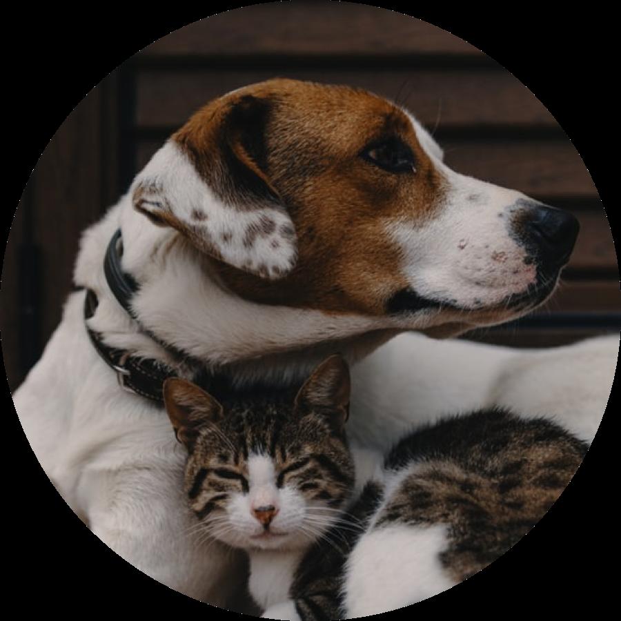 강아지와 고양이 사진
