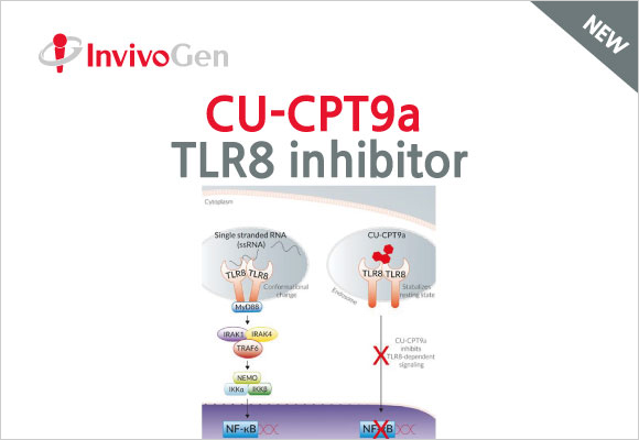 CU-CPT9a TLR8 inhibitor