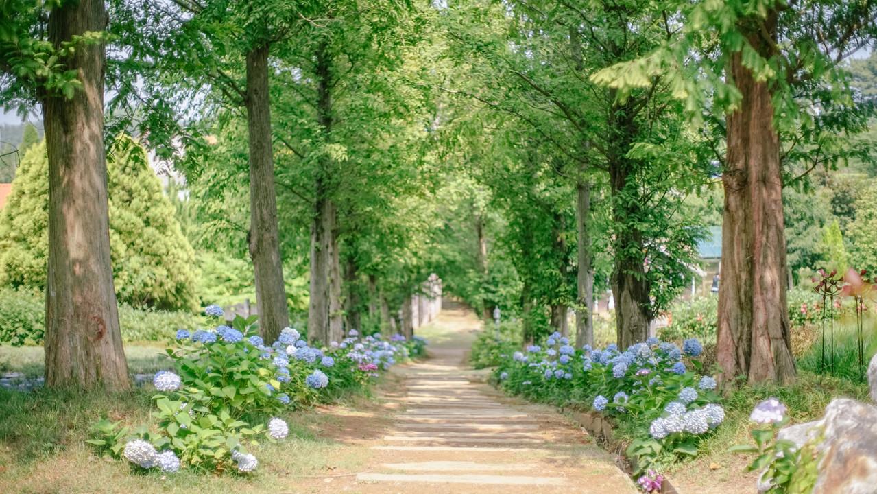 팜카밀레  허브공원