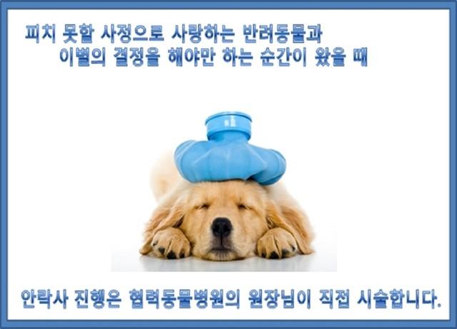 반려동물 안락사