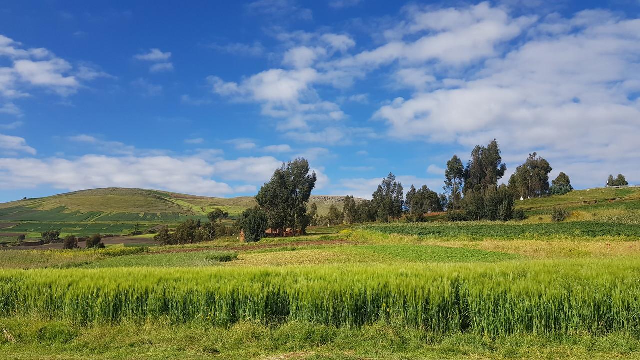 2020년 페루 키노아 농장 및 공장 방문