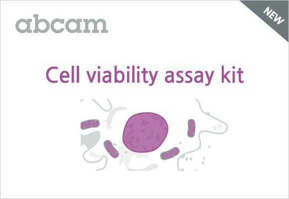 세포 활성/독성을 간편하게 확인