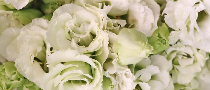"<h2 style=""font-weight: 700; line-height: 0.3;"">flower</h2><br><p style=""line-height: 1.5;"">계절과 트랜드에 맞게 구성한 꽃을<br>집에서 편하게 만나보세요.</p>"